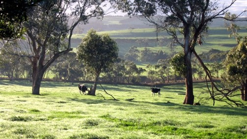 Bellevue Farmstay - QLD Tourism