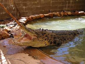 Wyndham Zoological Gardens and Crocodile Park - QLD Tourism