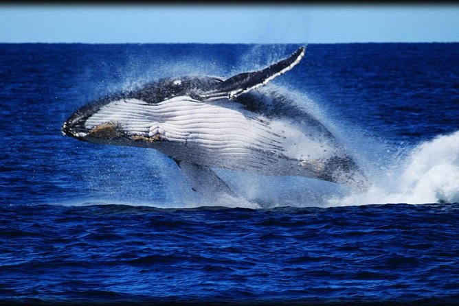 Whale Watching Cruise from Redcliffe Brisbane or the Sunshine Coast - QLD Tourism