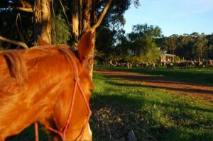 Billa Billa Farm Cottages - QLD Tourism
