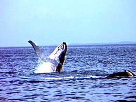 Whale Watching - QLD Tourism