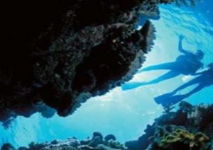 Deep Sea Divers Den - QLD Tourism